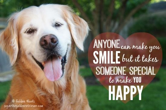 Happy Dog Pictures With Captions