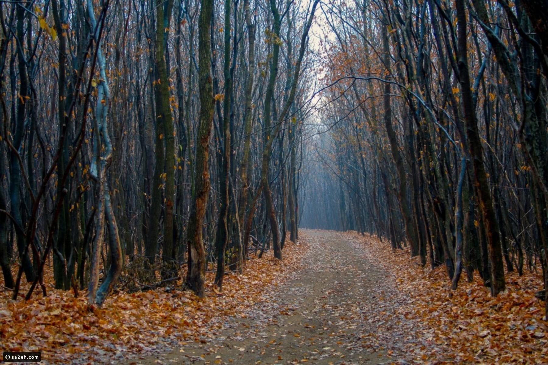 صور أغرب وأجمل الغابات حول العالم سائح Scary Places Hoia Baciu Forest Mysterious Places