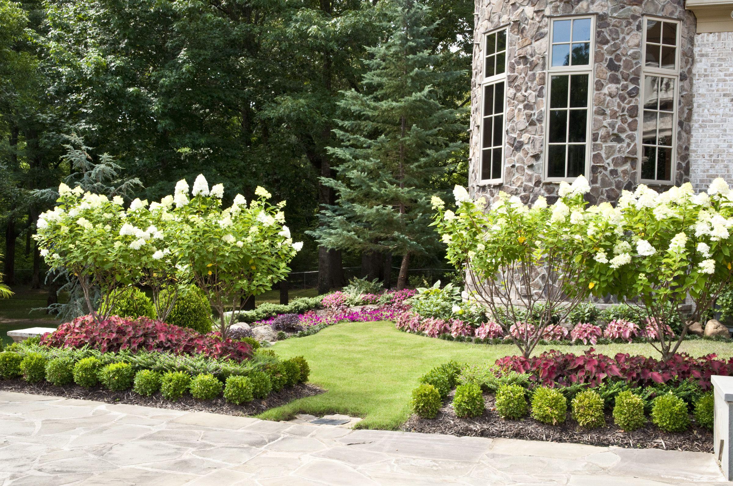 Treeform Limelight Hydrangea U0026 Seasonal Plantings By Gurleyu0027s Azalea Garden,  Inc.  Memphis,