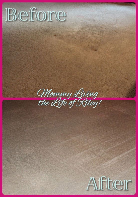 Review Stanley Steemer Gets Your Home Holiday Ready Carpet
