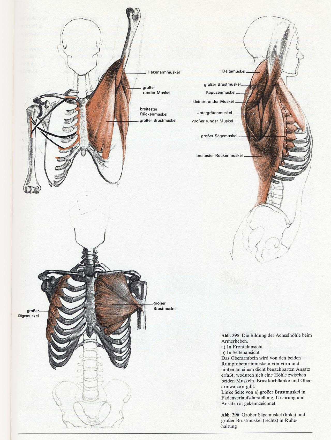 Anatomy - Bammes - Der nackte Mensch | Bammes - Der nackte Mensch ...