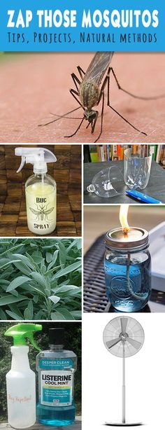 Zap Those Mosquitos! How to Repel Mosquitos | gardening ...