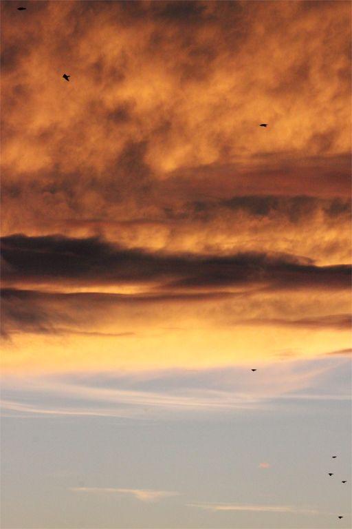 Sunset Birds  - Franche-Comté, France - (c) Photographer - AnneCecile - YouPic