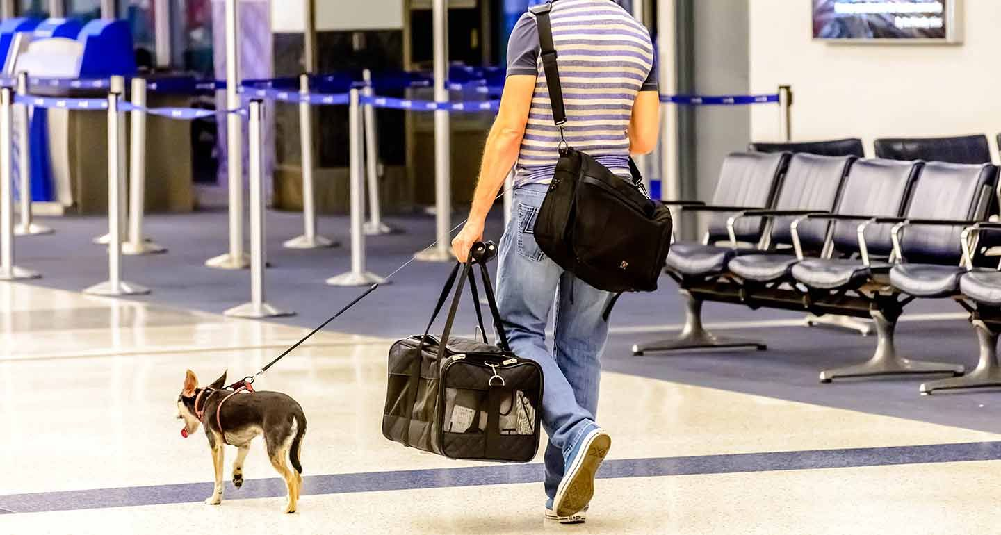 Complete Airline Pet Policy Guide for All U.S. Airlines