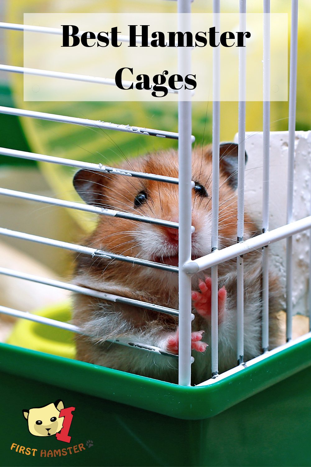 6b8ca930c55e2a8feede041f7163524e - How To Get My Hamster To Stop Biting His Cage