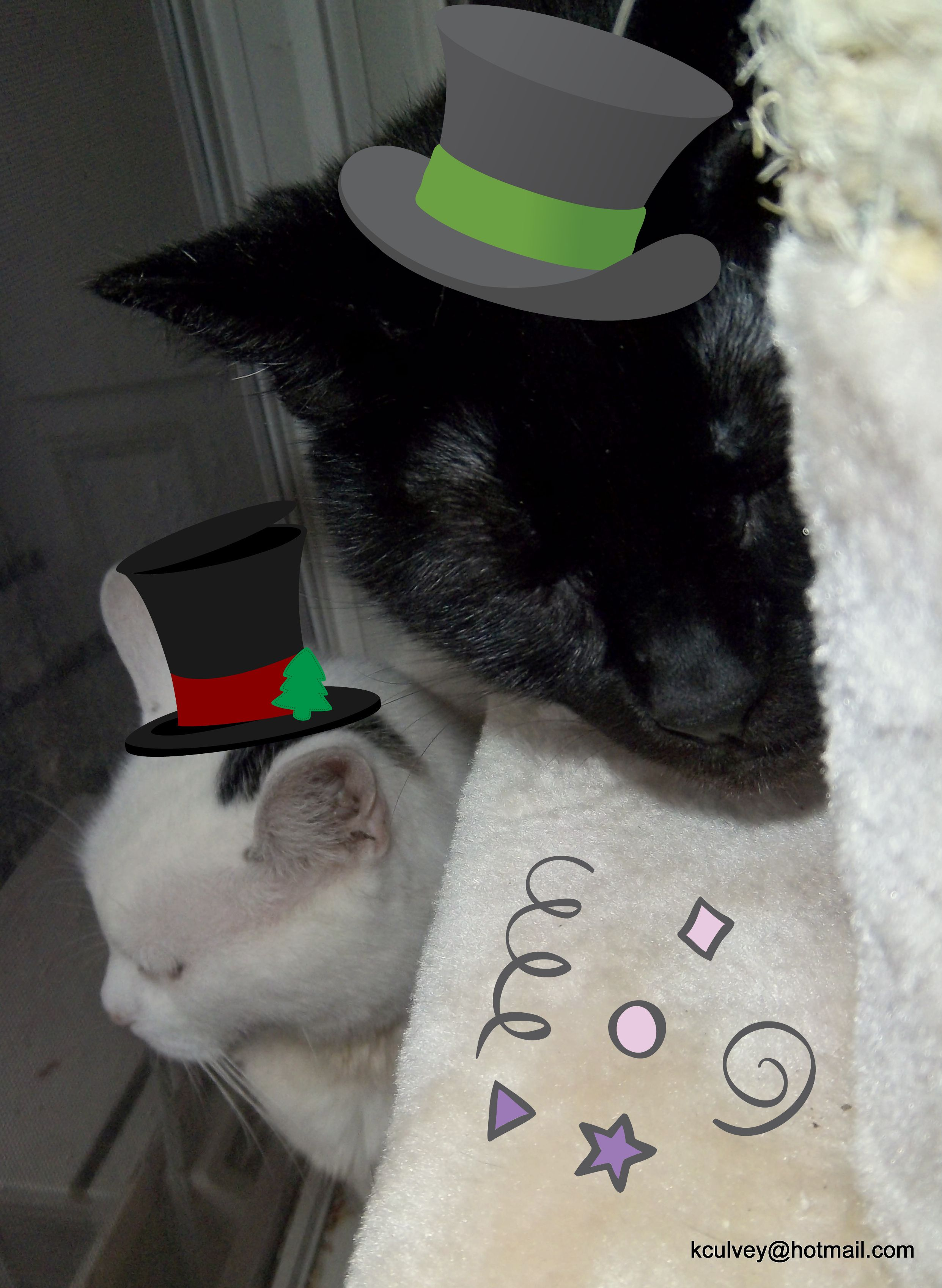 Both my lover cats, having a party!!