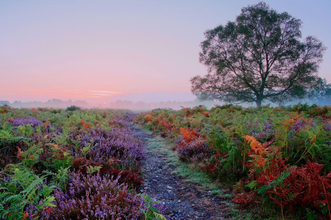 renamonkalou:  Rockford Common sunrise |  Mark Couper