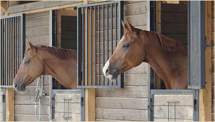 Horse stable horse related stuff pinterest horse for Horse farm