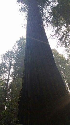 Jebediah Smith Redwood State Park