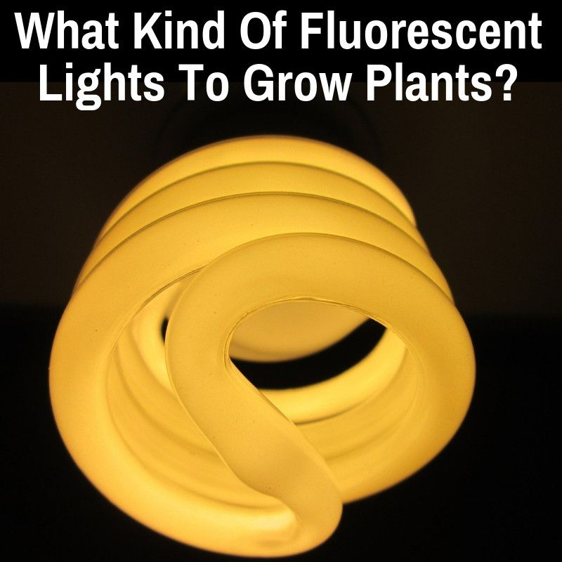Pin On Fluorescent Grow Lights 400 x 300