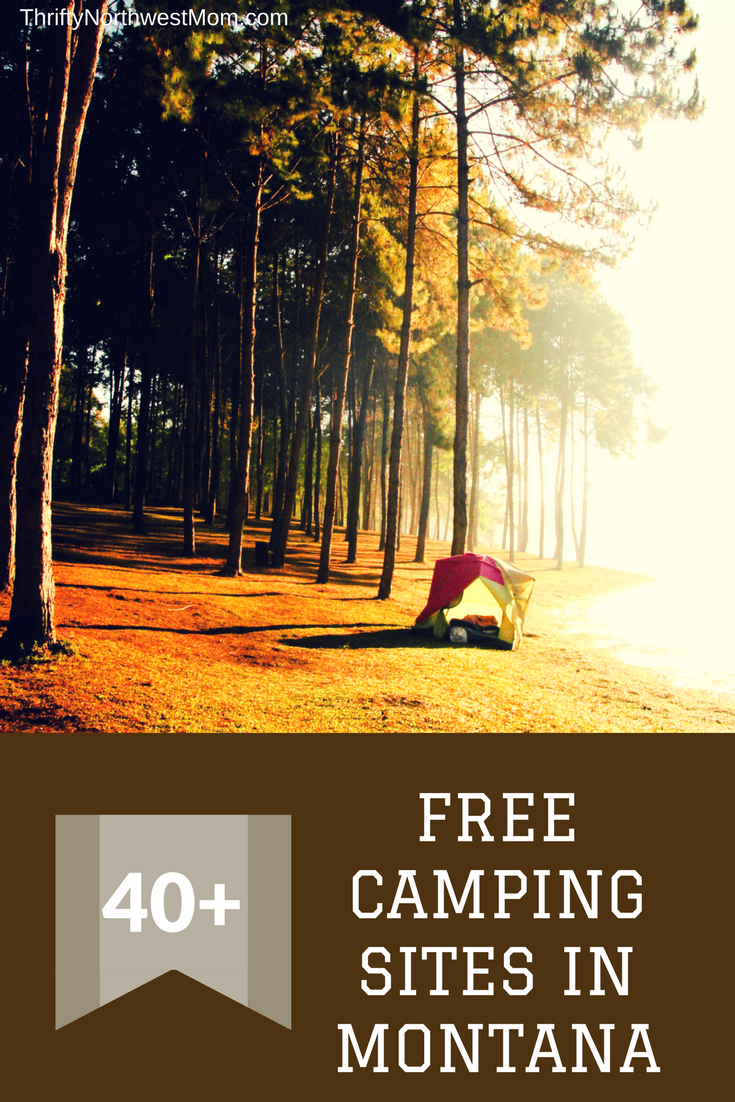 40+ Best Camping images in 2020