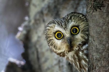 Winter Birds Desktop Wallpaper Winter Bird Photos Cool Wallpapers Owl Wallpaper Snowy Owl Snow Owl