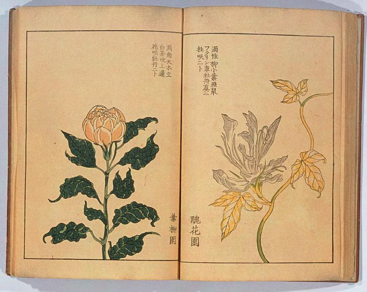 朝顔三十六花撰:Campanillas. Artista: Hattori, Sessai (nacido en 1807). 1854 d. C. Japón. Tokio. (13).