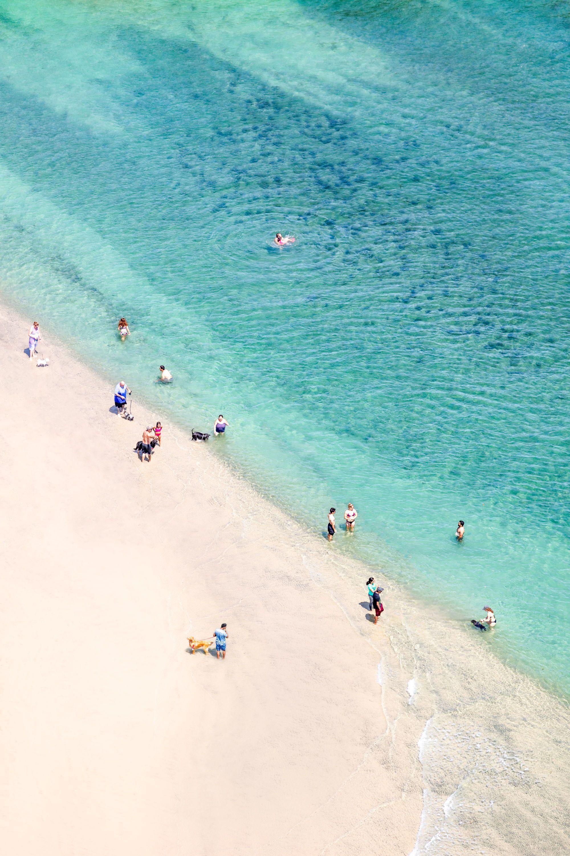 Travel Guide San Diego Beaches San Diego Beach San Diego Travel Ocean Beach