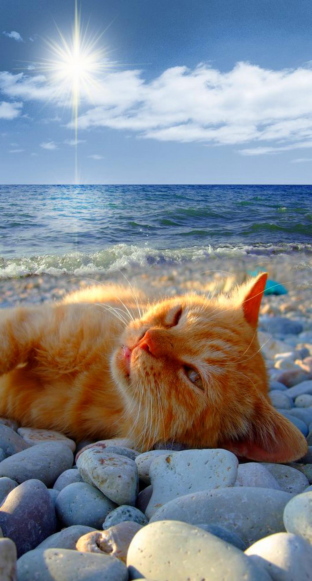 Доброе утро, веселые морские картинки