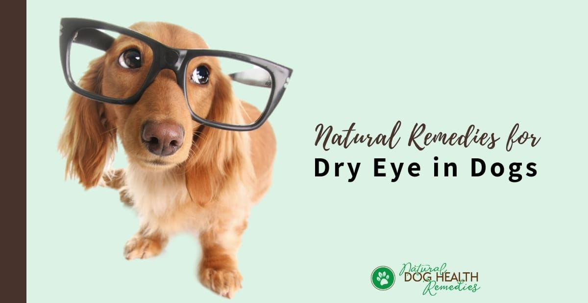 Dry eye in dogs dry eyes dogs health remedies natural