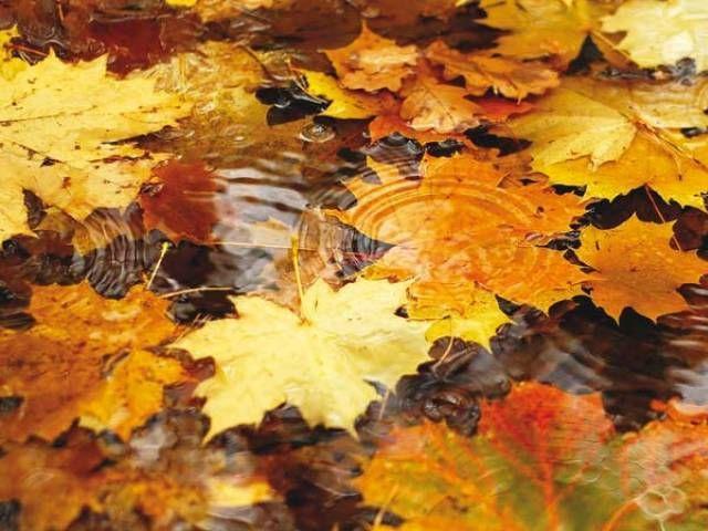 Good Fall Feels: Goodbye Summer, Hello Autumn!   The Express Tribune Design Ideas