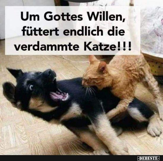Um Gottes Willen, füttert endlich die verdammte Katze! | Lustige Bilder, Sprüche, Witze, echt lustig #cuteanimalhumor