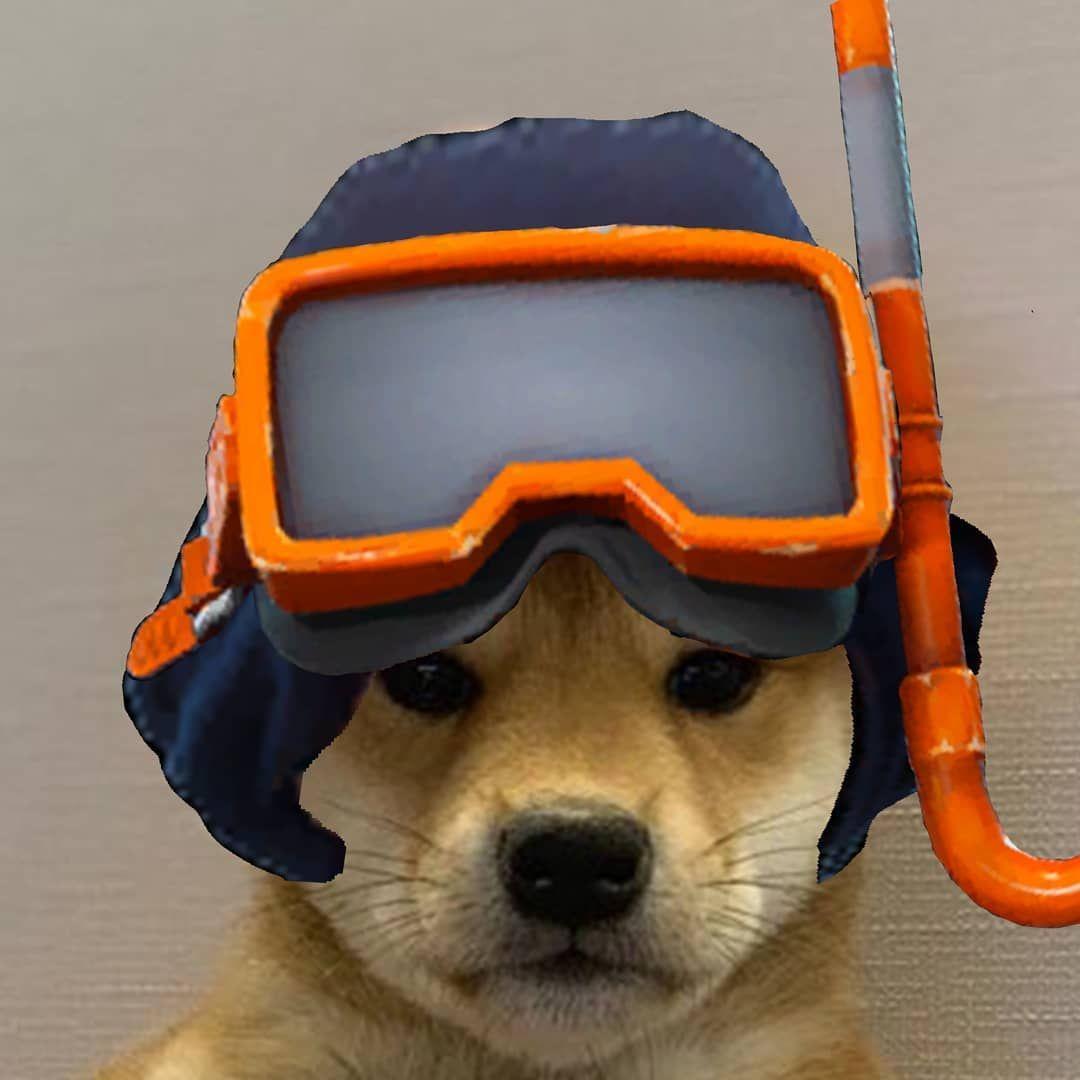 ᴅᴏɢ ɪɴsɪᴅᴇ ᴛʜᴇ ɢᴀɴɢ On Instagram Dogwifhatgang Dogwifhat In 2020 Savage Wallpapers Hypebeast Wallpaper Doggy