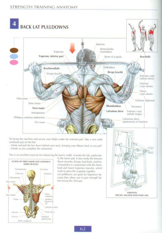 #strengthtraining #strength #training #anatomy