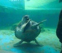 Inspiring image background, dancing, funny, turtles, wallpaper #4383385 by OwlPurist - Resolution 592x444px - Find the image to your taste