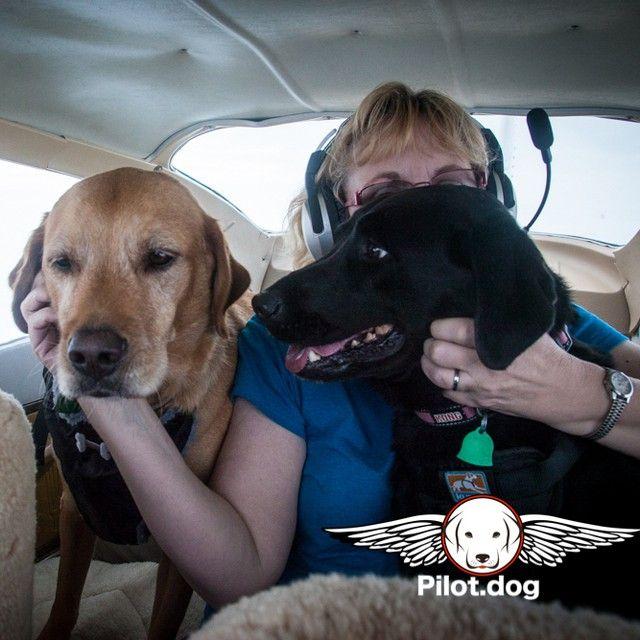 Pin On Pilot Dog Mission Photos