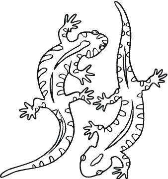 Salamander Coloring Pages Colouring Pages Kindergarten Coloring Pages