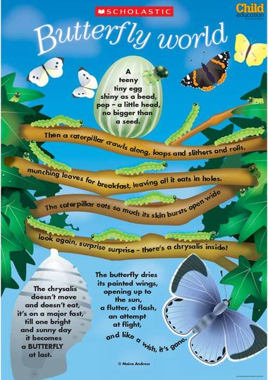 A colourful poster poem about the life cycle of a butterfly ...