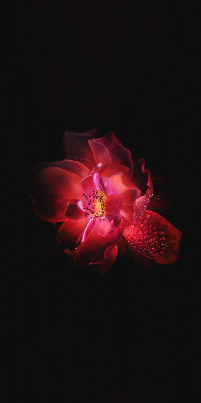Flower Flower Iphone Wallpaper Smartphone Wallpaper Cellphone Wallpaper