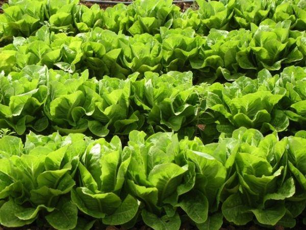 Wie Sie Den Kleinen Garten Optimal Nutzen Können #garten #kleinen #konnen # Nutzen