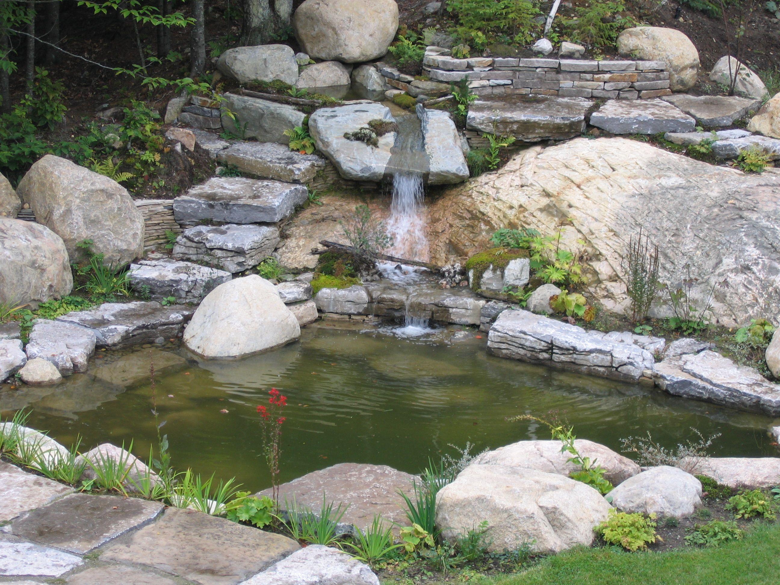 Un bassin d 39 eau stagnante parfait lieu de s r nit et zen for Amenagement paysager