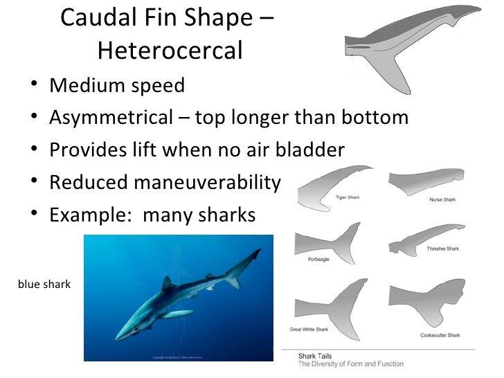 shark fin shape   Diagrams   Pinterest