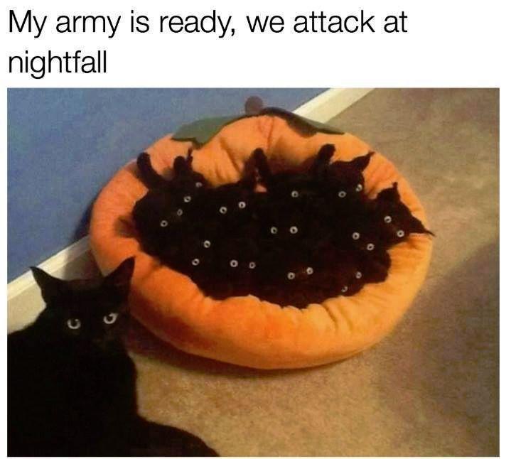 Photo of 29 Animal Memes, die Sie garantiert zum Kichern bringen