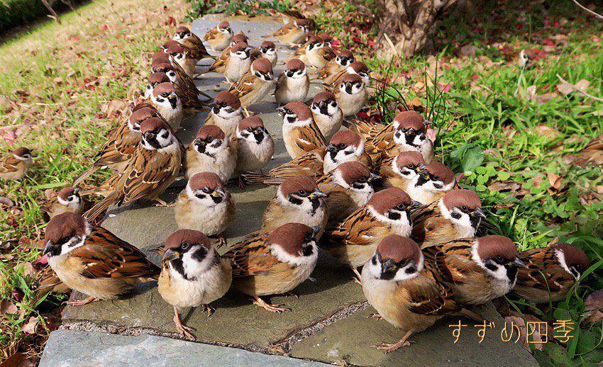 「かわいい鳥」おしゃれまとめの人気アイデア Pinterest ぽにん   鳥 かわいい. 鳥. かわいい