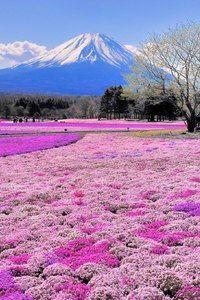 Mt. Fuji, Japan HTC Butterfly Wallpaper