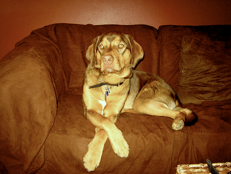 How To Train A Dog To Stay Off The Couch An Expert Guide Dog