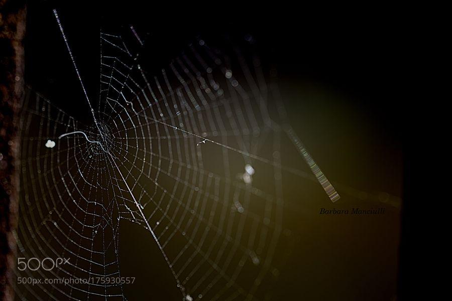Le storie sono ragnatele collegate filo per filo by barbaramanciulli65. @go4fotos