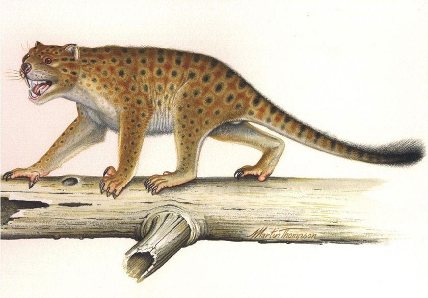 marsupial lion thylacoleo carnifex