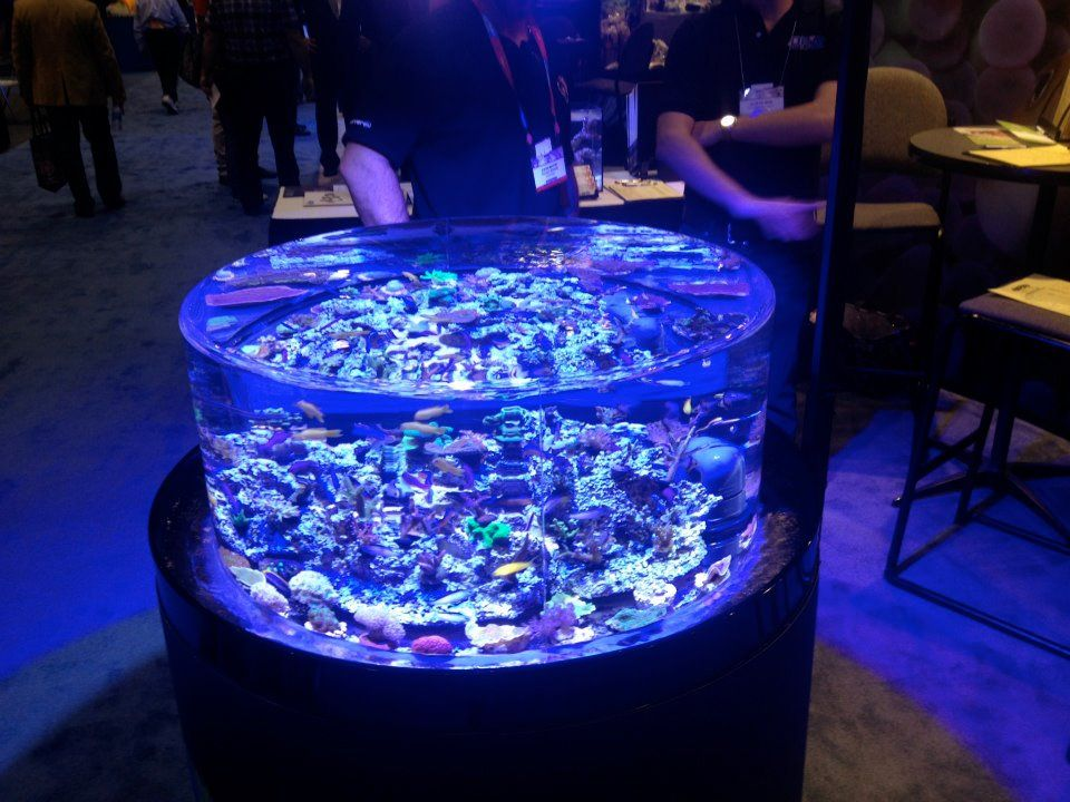Always Love Ora Oceans Reefs Aquariums Infinity Tank Lit With