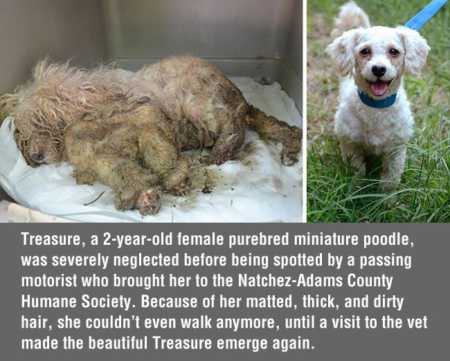 16 Inspiring Pictures Of Dogs Before And After Their Rescue