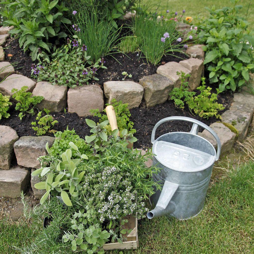 Photo of Å plante urter: de beste tipsene og triksene
