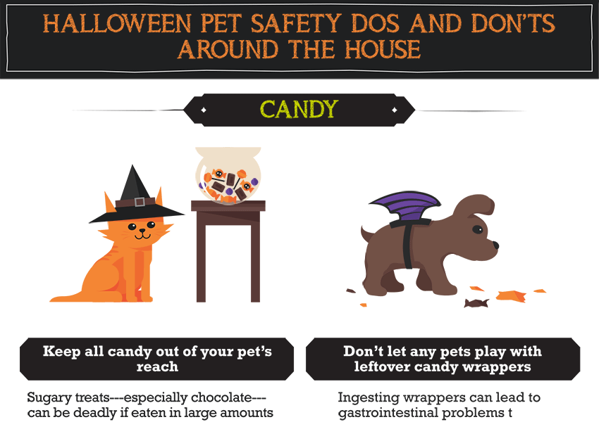 Halloween Pet Safety Do S And Don Ts Around The House Candy Halloween Pet Safety Halloween Animals Pet Safety