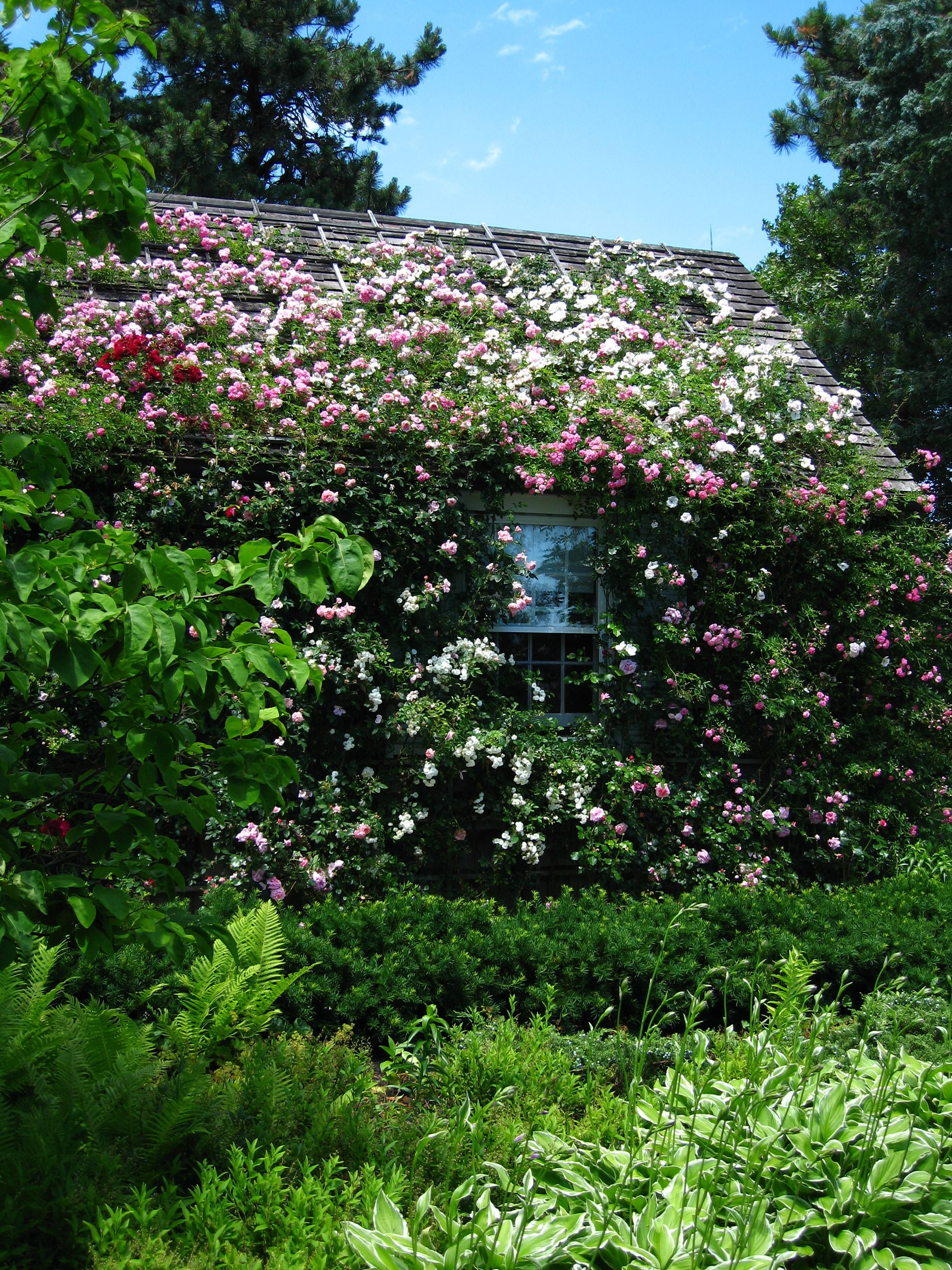 Cape Beauty! Cute cottage, Cape cod cottage, Dream garden