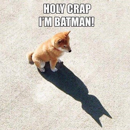 Well To The Bat Cave I Guess Funny Animal Jokes Funny Dog Memes Animal Jokes