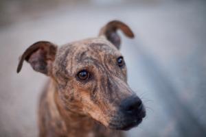 I Found Mum On Dog Sounds Dog Adoption Fur Babies