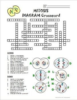 Mitosis Crossword with Diagram (Google Slide,... by ...