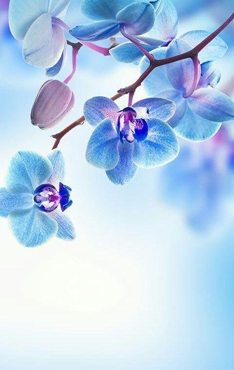 Flowers Blue And Wallpaper Image Flower Background Wallpaper Beautiful Landscape Wallpaper Flower Wallpaper