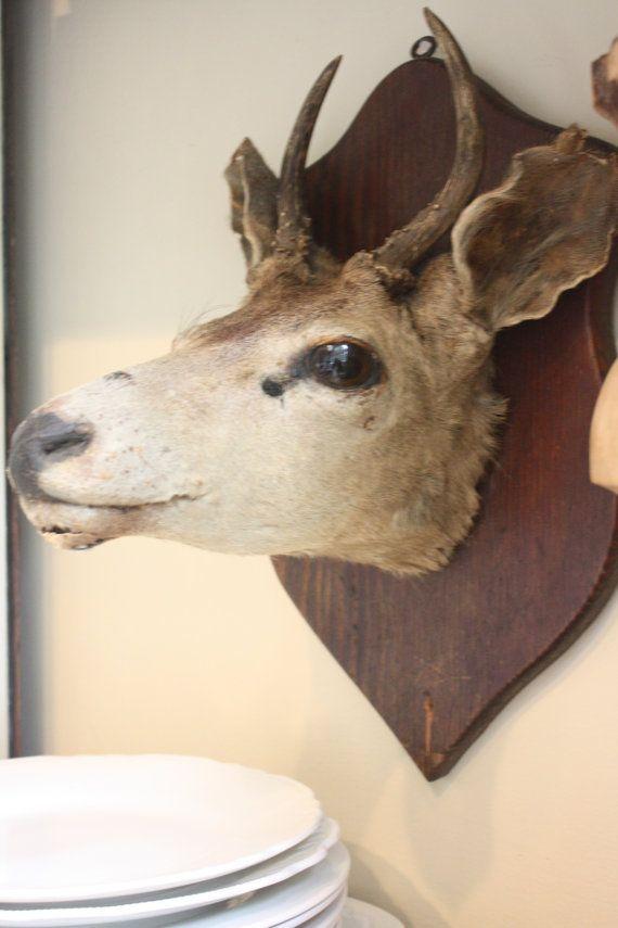 taxidermy Deer mount by mysweetsavannah on Etsy, $129.00