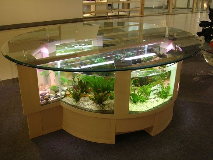 This yes fish eating with fishes for the home pinterest aquarium fish tank aquarium - Fish tank dining room table ...