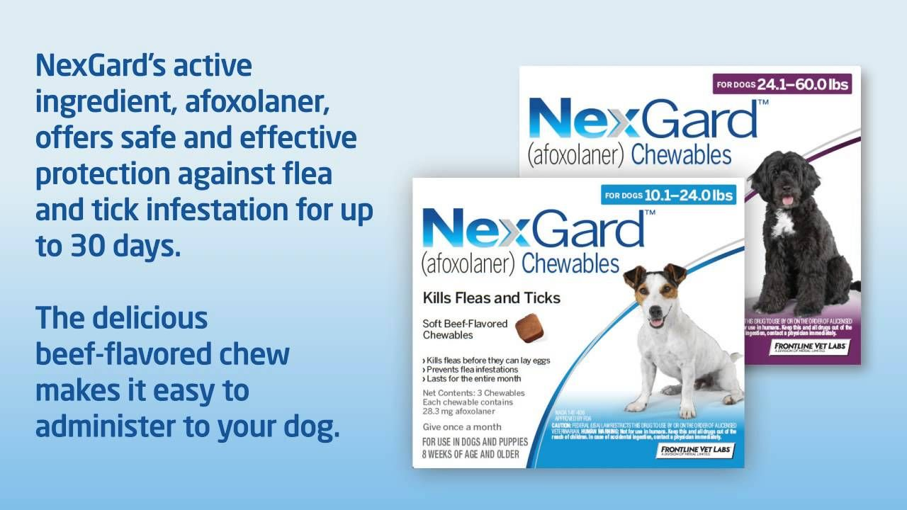 Pin on Heartworm Prevention